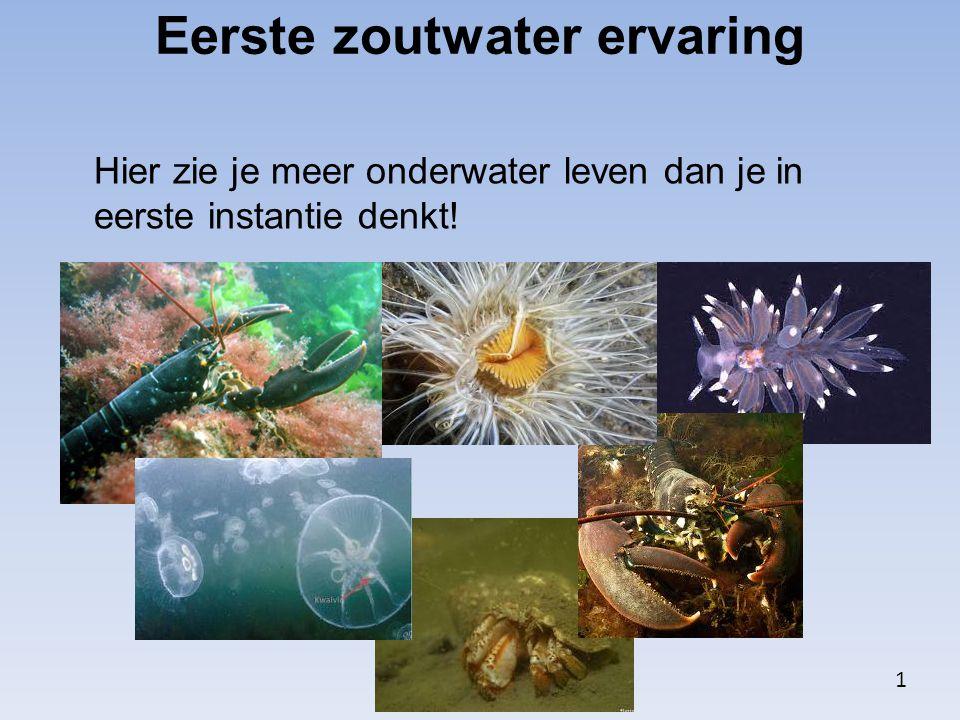 Eerste zoutwater ervaring Hier zie je meer onderwater leven dan je in eerste instantie denkt! 1