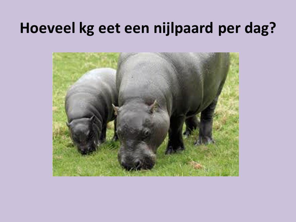 Hoeveel kg eet een nijlpaard per dag?