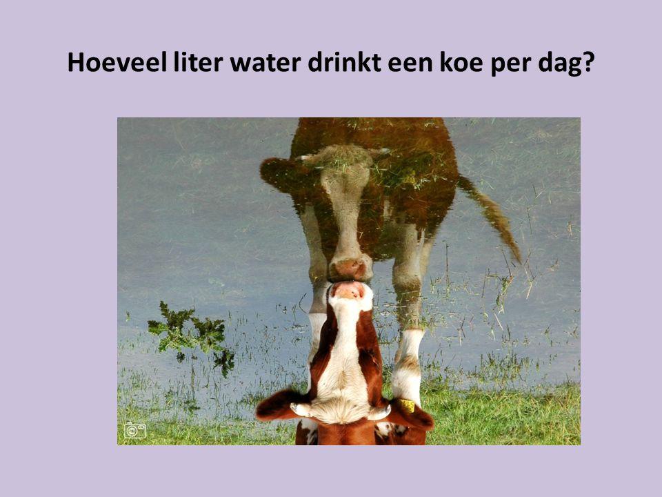 Hoeveel liter water drinkt een koe per dag?