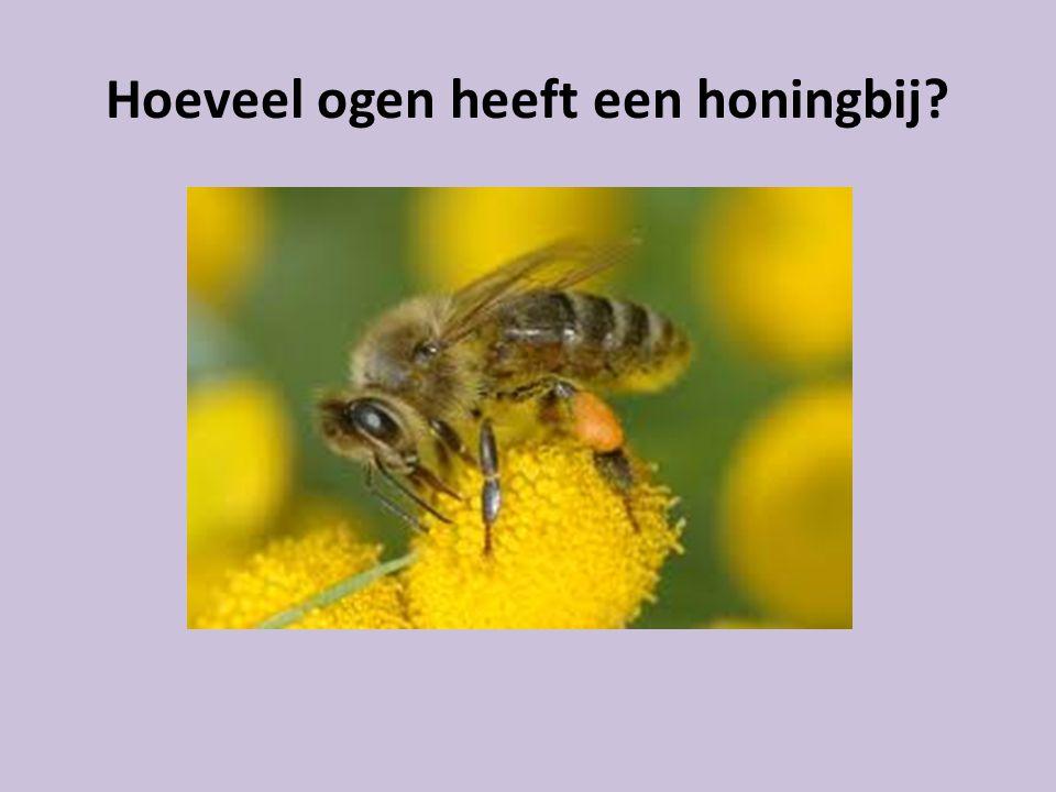 Hoeveel ogen heeft een honingbij?