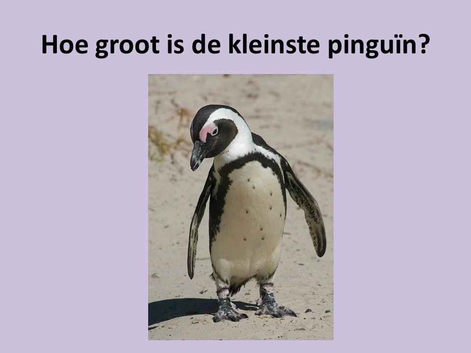 Hoe groot is de kleinste pinguïn?