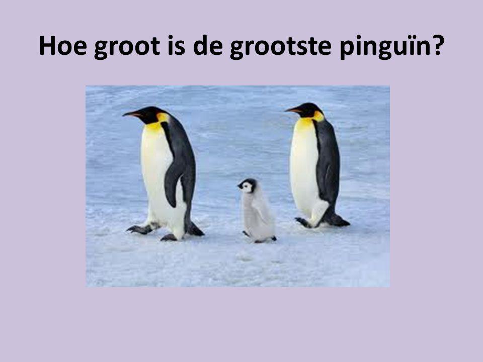 Hoe groot is de grootste pinguïn?