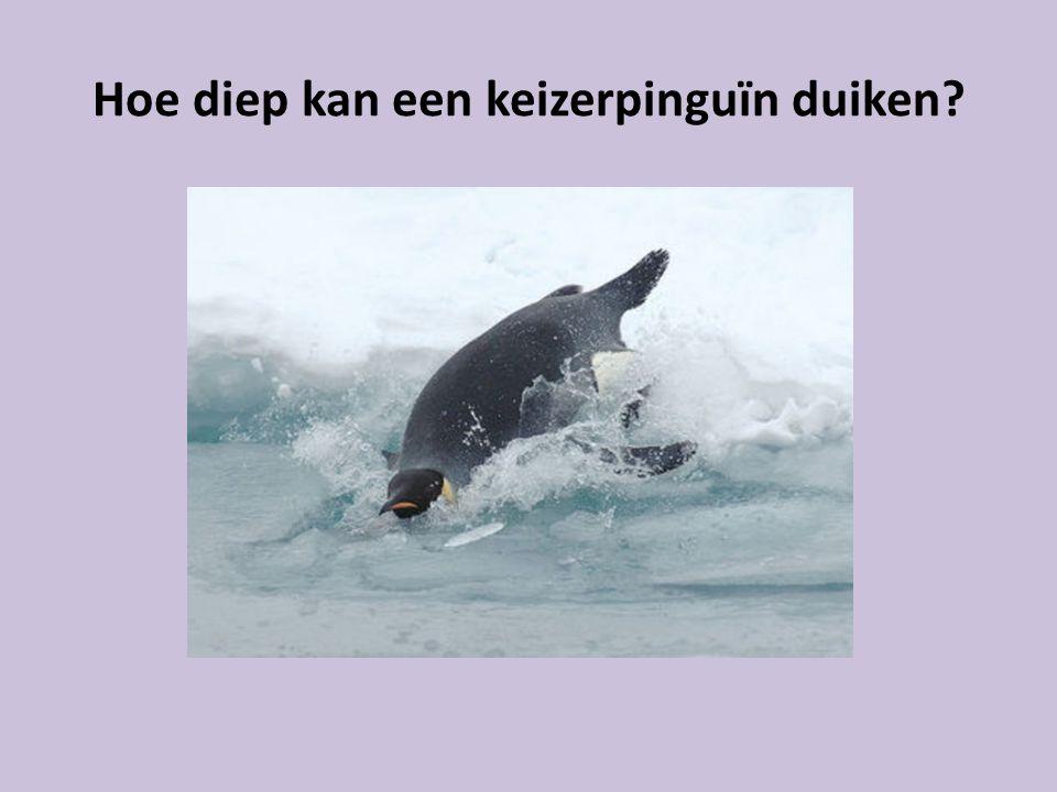 Hoe diep kan een keizerpinguïn duiken?