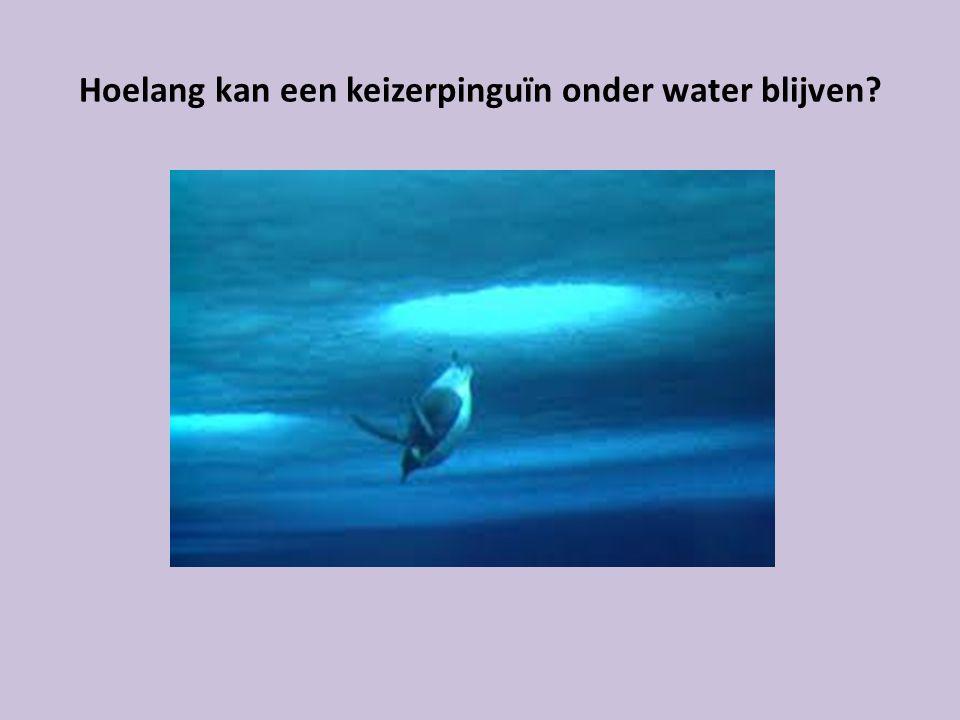 Hoelang kan een keizerpinguïn onder water blijven?