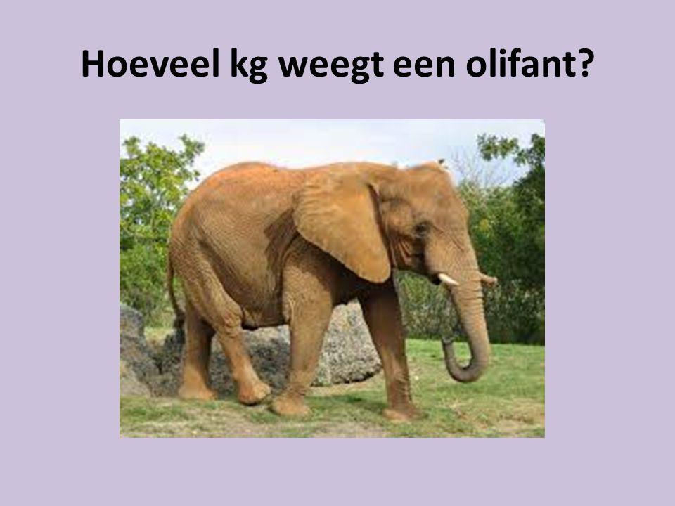 Hoeveel kg weegt een olifant?