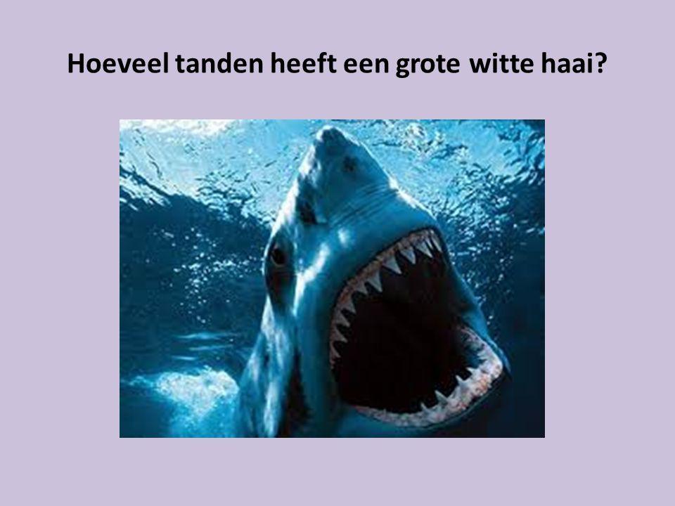 Hoeveel tanden heeft een grote witte haai?