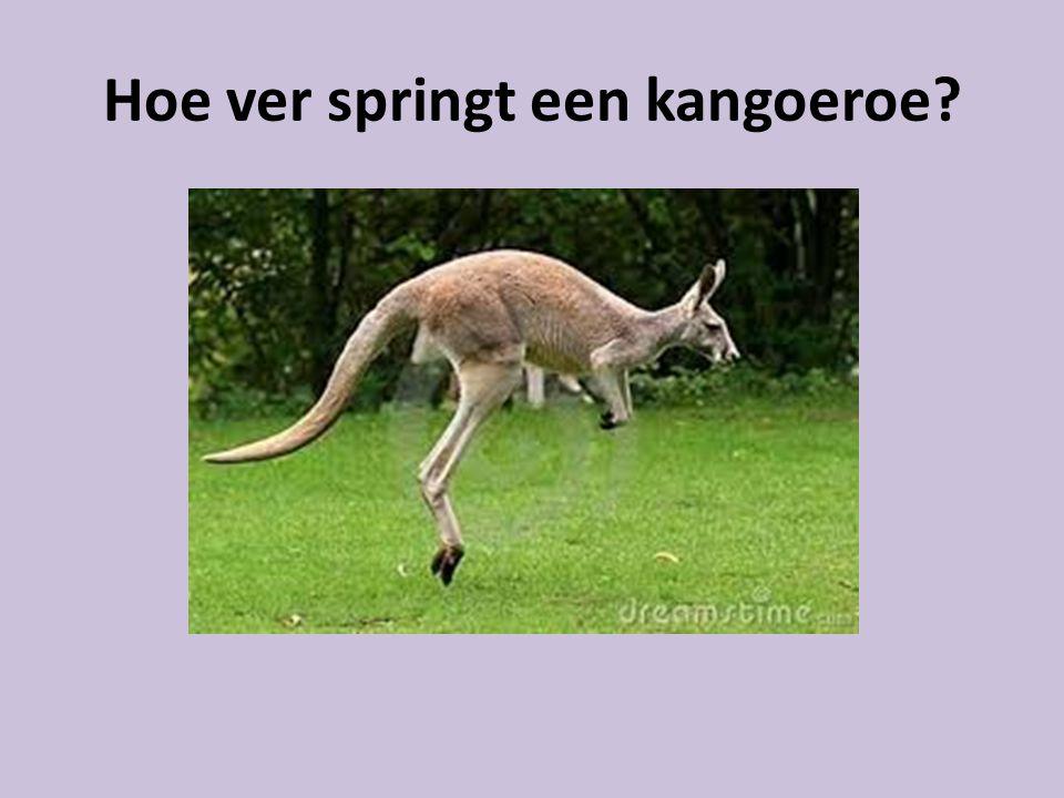 Hoe ver springt een kangoeroe?
