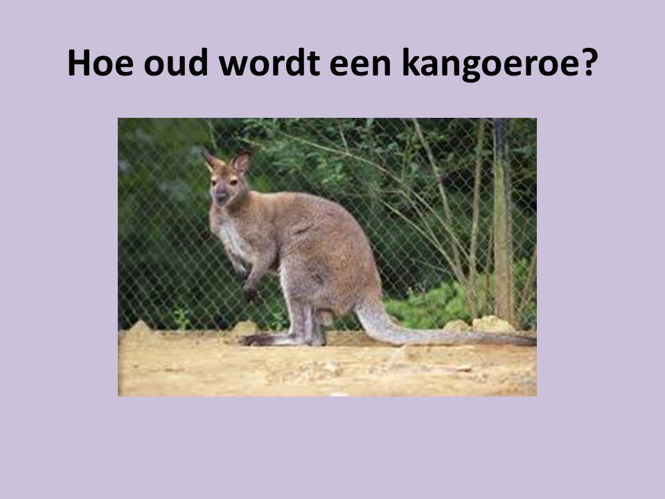 Hoe oud wordt een kangoeroe?