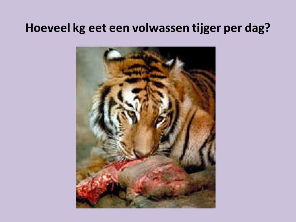 Hoeveel kg eet een volwassen tijger per dag?