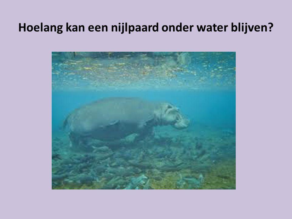 Hoelang kan een nijlpaard onder water blijven?