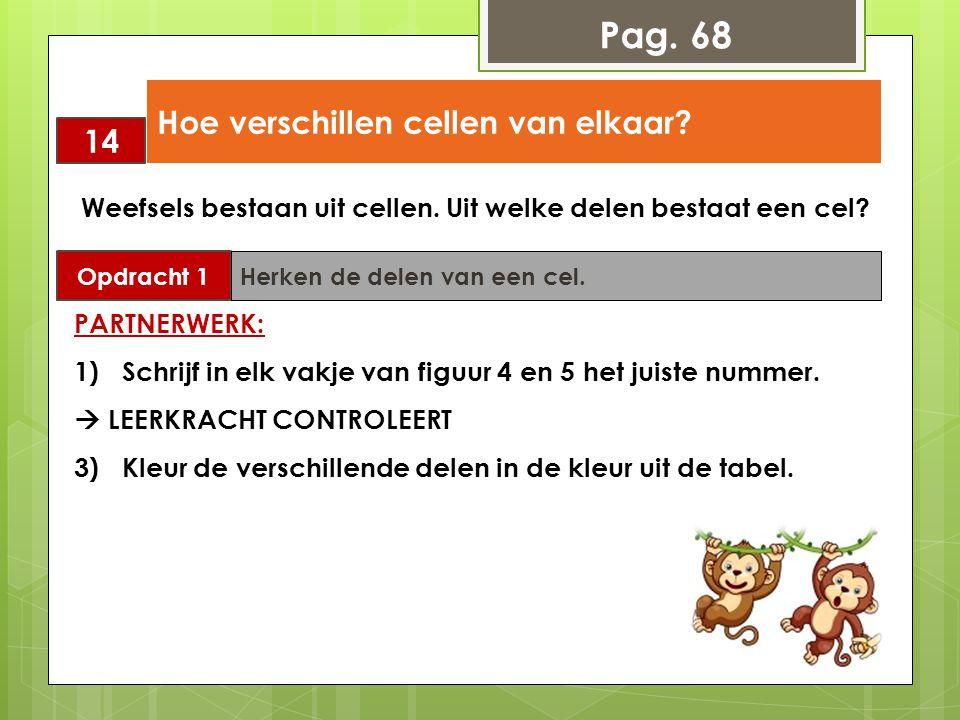 Pag. 68 14 Hoe verschillen cellen van elkaar? Opdracht 1 Herken de delen van een cel. Weefsels bestaan uit cellen. Uit welke delen bestaat een cel? PA