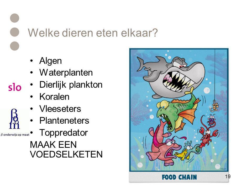 Welke dieren eten elkaar? •Algen •Waterplanten •Dierlijk plankton •Koralen •Vleeseters •Planteneters •Toppredator MAAK EEN VOEDSELKETEN 19