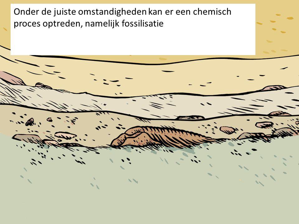 Onder de juiste omstandigheden kan er een chemisch proces optreden, namelijk fossilisatie