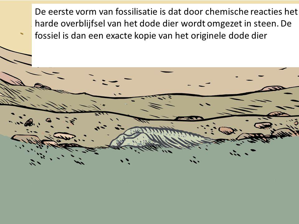 De eerste vorm van fossilisatie is dat door chemische reacties het harde overblijfsel van het dode dier wordt omgezet in steen. De fossiel is dan een