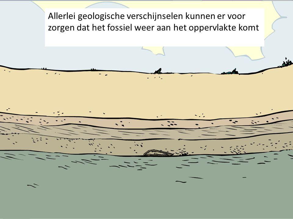 Allerlei geologische verschijnselen kunnen er voor zorgen dat het fossiel weer aan het oppervlakte komt