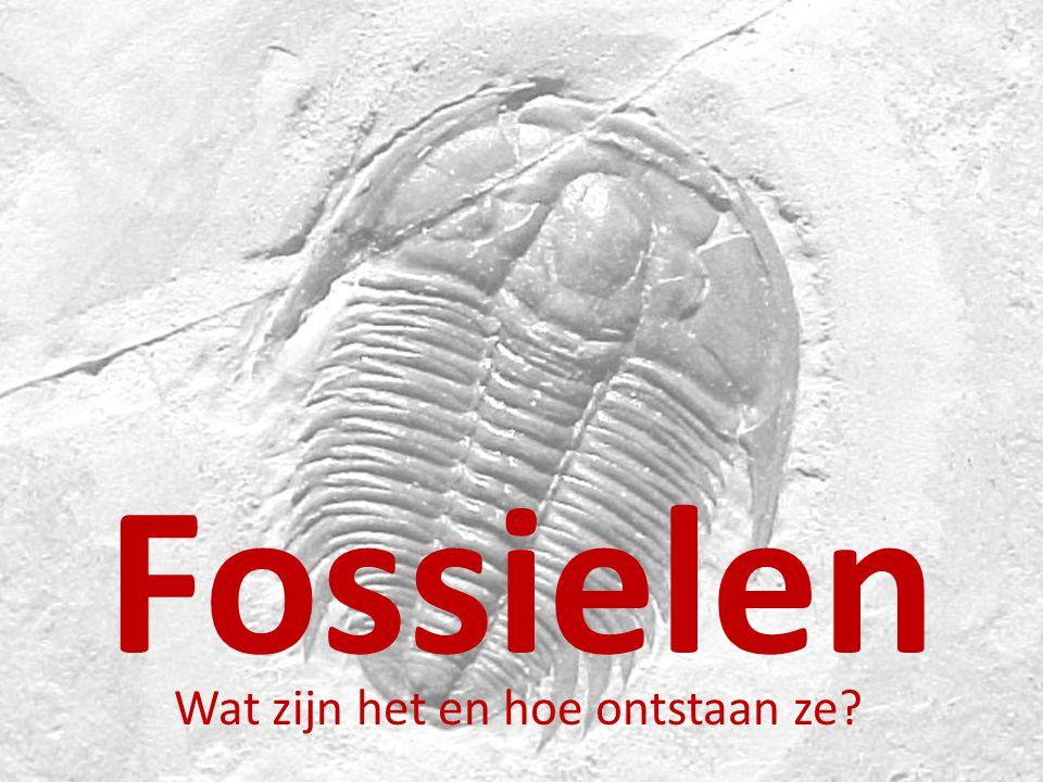 Fossielen Wat zijn het en hoe ontstaan ze?