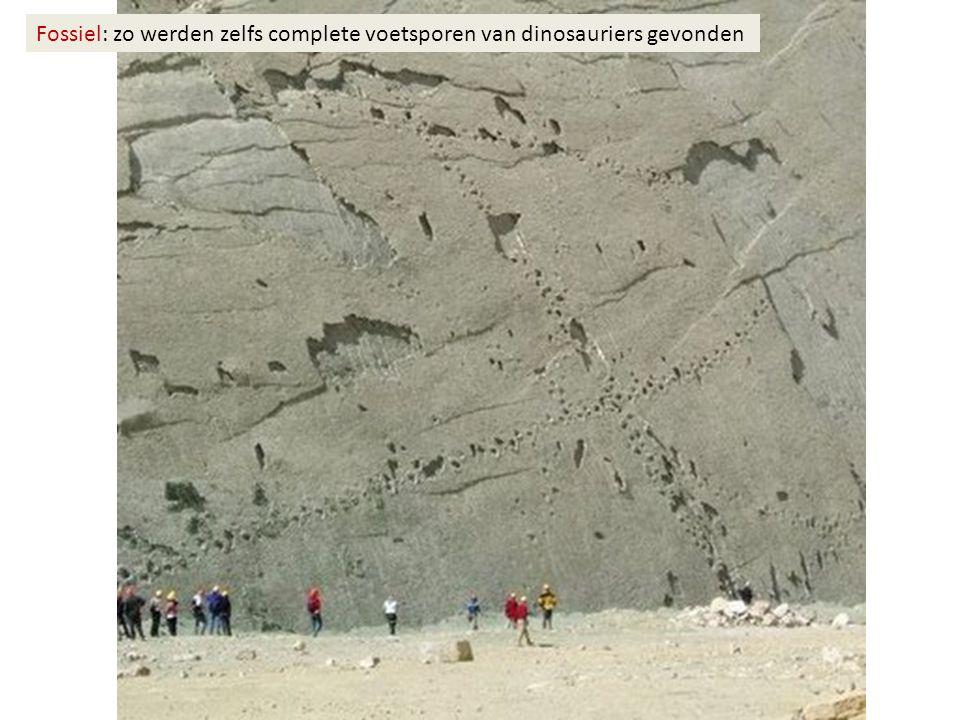 Fossiel: zo werden zelfs complete voetsporen van dinosauriers gevonden