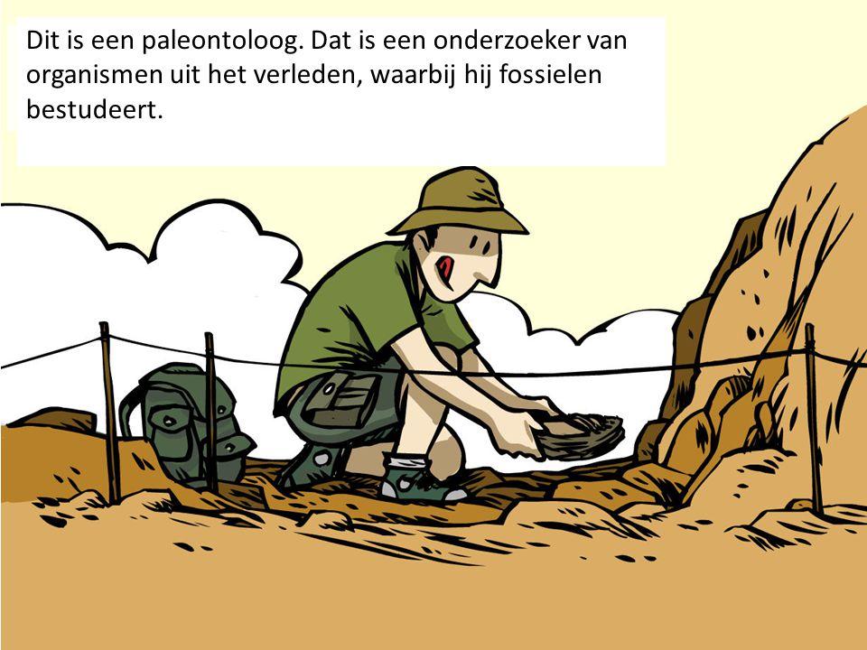 Dit is een paleontoloog. Dat is een onderzoeker van organismen uit het verleden, waarbij hij fossielen bestudeert.