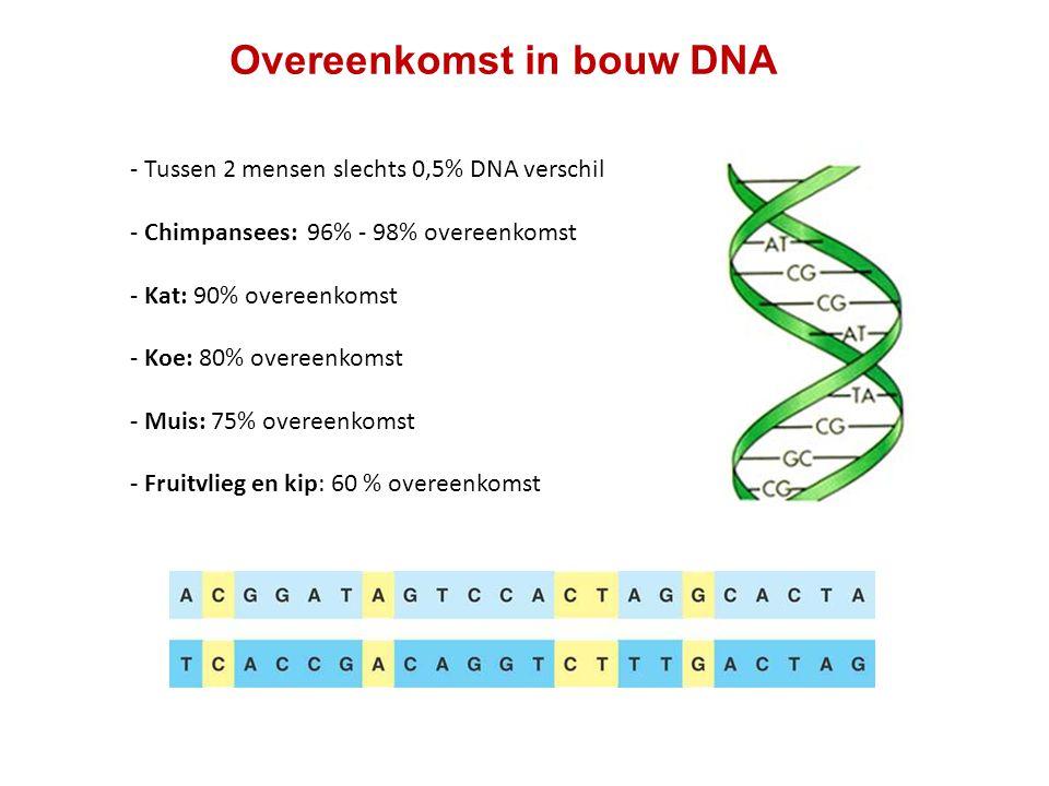 Overeenkomst in bouw DNA - Tussen 2 mensen slechts 0,5% DNA verschil - Chimpansees: 96% - 98% overeenkomst - Kat: 90% overeenkomst - Koe: 80% overeenk