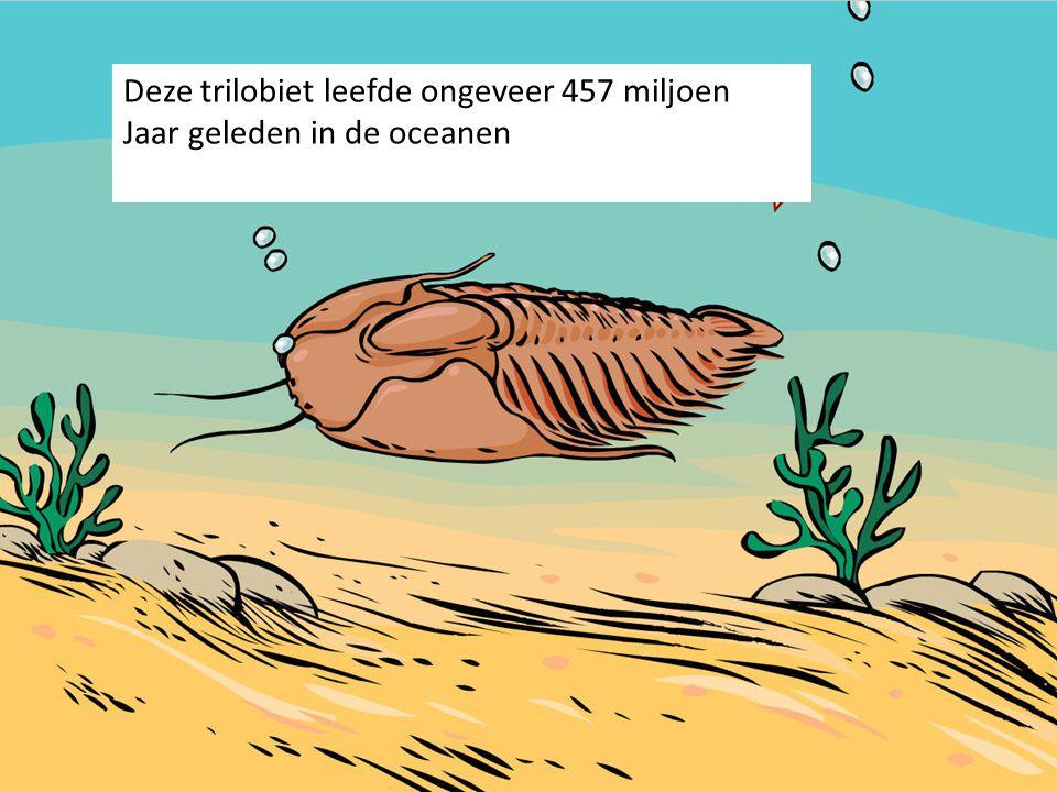 Deze trilobiet leefde ongeveer 457 miljoen Jaar geleden in de oceanen