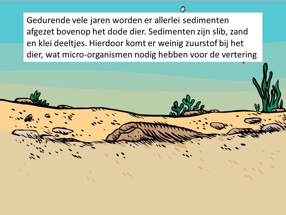 Gedurende vele jaren worden er allerlei sedimenten afgezet bovenop het dode dier. Sedimenten zijn slib, zand en klei deeltjes. Hierdoor komt er weinig