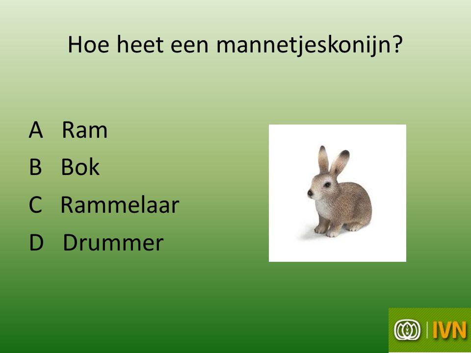 Hoe heet een mannetjeskonijn? A Ram B Bok C Rammelaar D Drummer