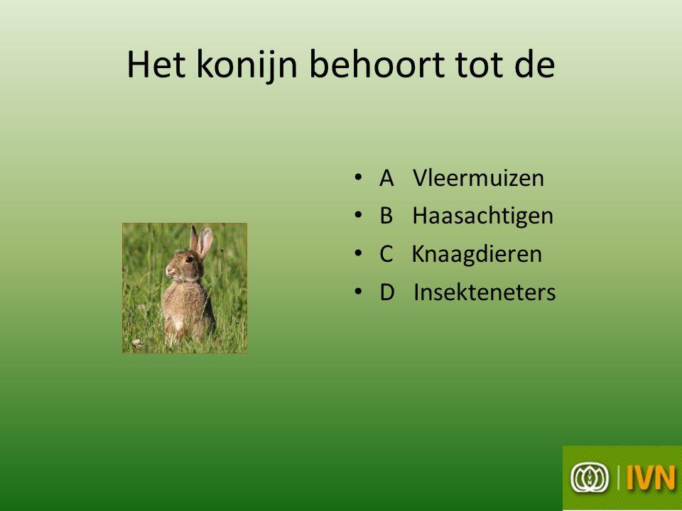 Het konijn behoort tot de • A Vleermuizen • B Haasachtigen • C Knaagdieren • D Insekteneters