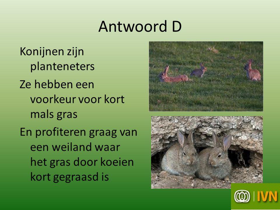 Antwoord D Konijnen zijn planteneters Ze hebben een voorkeur voor kort mals gras En profiteren graag van een weiland waar het gras door koeien kort gegraasd is
