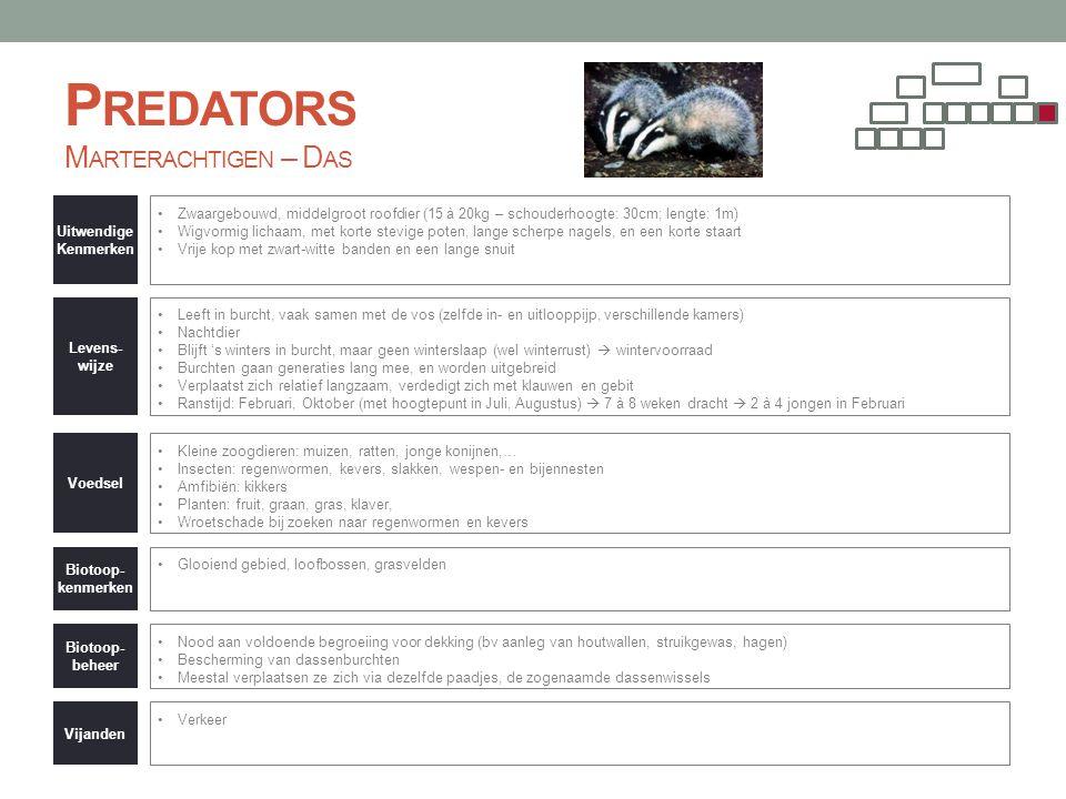 P REDATORS M ARTERACHTIGEN – D AS Uitwendige Kenmerken •Zwaargebouwd, middelgroot roofdier (15 à 20kg – schouderhoogte: 30cm; lengte: 1m) •Wigvormig l
