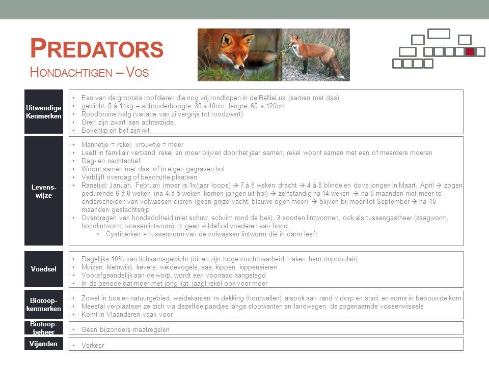 P REDATORS H ONDACHTIGEN – V OS Uitwendige Kenmerken •Een van de grootste roofdieren die nog vrij rondlopen in de BeNeLux (samen met das) •gewicht: 5