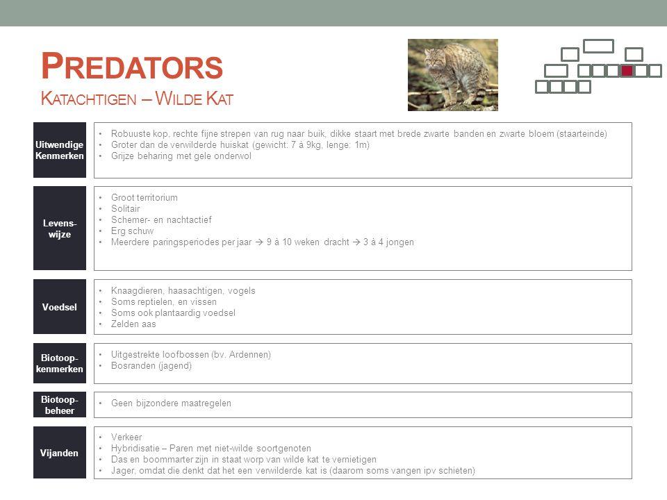P REDATORS K ATACHTIGEN – W ILDE K AT Uitwendige Kenmerken •Robuuste kop, rechte fijne strepen van rug naar buik, dikke staart met brede zwarte banden
