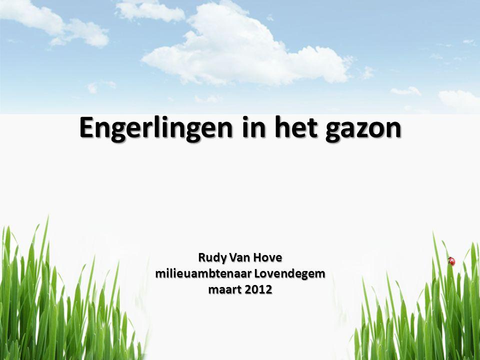 Engerlingen in het gazon Rudy Van Hove milieuambtenaar Lovendegem maart 2012
