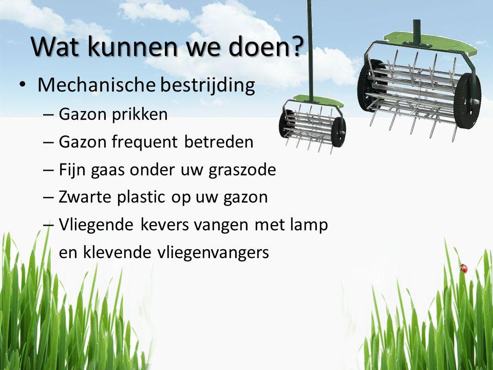 Wat kunnen we doen? • Mechanische bestrijding – Gazon prikken – Gazon frequent betreden – Fijn gaas onder uw graszode – Zwarte plastic op uw gazon – V