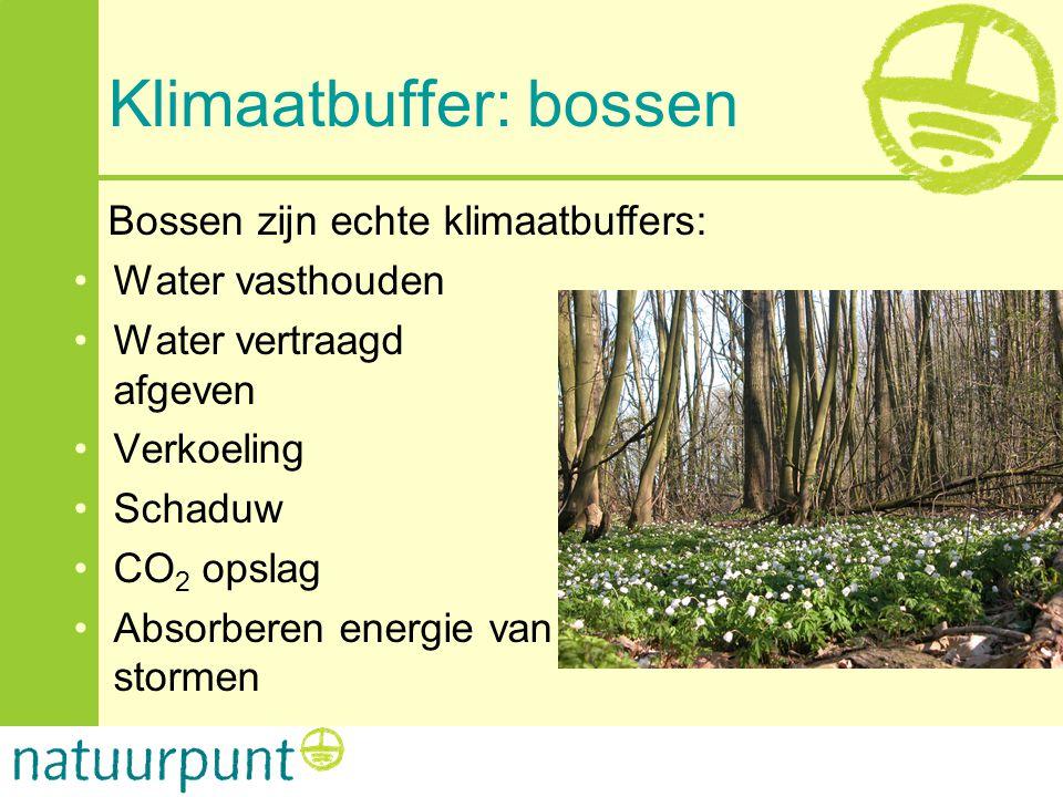 Klimaatbuffer: bossen Bossen zijn echte klimaatbuffers: •Water vasthouden •Water vertraagd afgeven •Verkoeling •Schaduw •CO 2 opslag •Absorberen energ