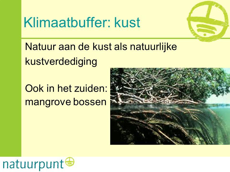 Klimaatbuffer: kust Natuur aan de kust als natuurlijke kustverdediging Ook in het zuiden: mangrove bossen