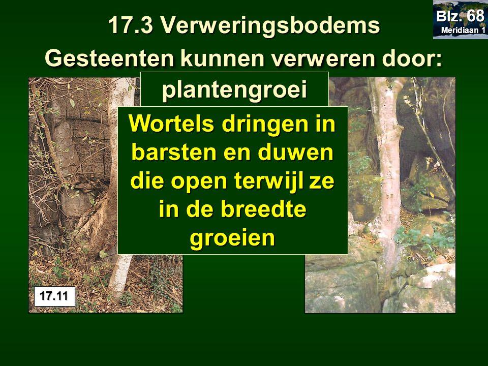 17.3 Verweringsbodems Gesteentenverweren Gesteenten kunnen verweren door: plantengroei Wortels dringen in barsten en duwen die open terwijl ze in de b