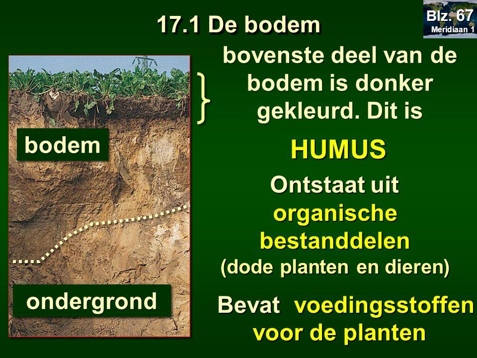17.1 De bodem HUMUS organische bestanddelen (dode planten en dieren) bovenste deel van de bodem is donker gekleurd. Dit is bodembodem ondergrondonderg