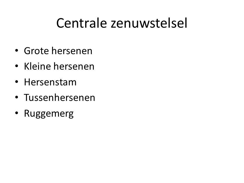 Centrale zenuwstelsel • Grote hersenen • Kleine hersenen • Hersenstam • Tussenhersenen • Ruggemerg