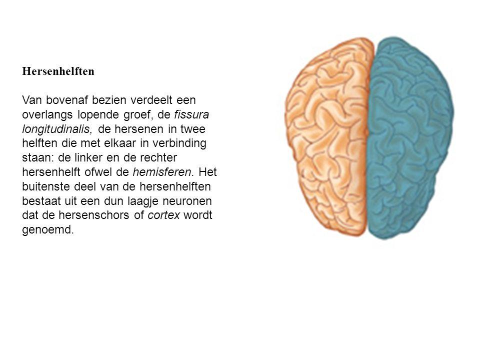 Hersenhelften Van bovenaf bezien verdeelt een overlangs lopende groef, de fissura longitudinalis, de hersenen in twee helften die met elkaar in verbin