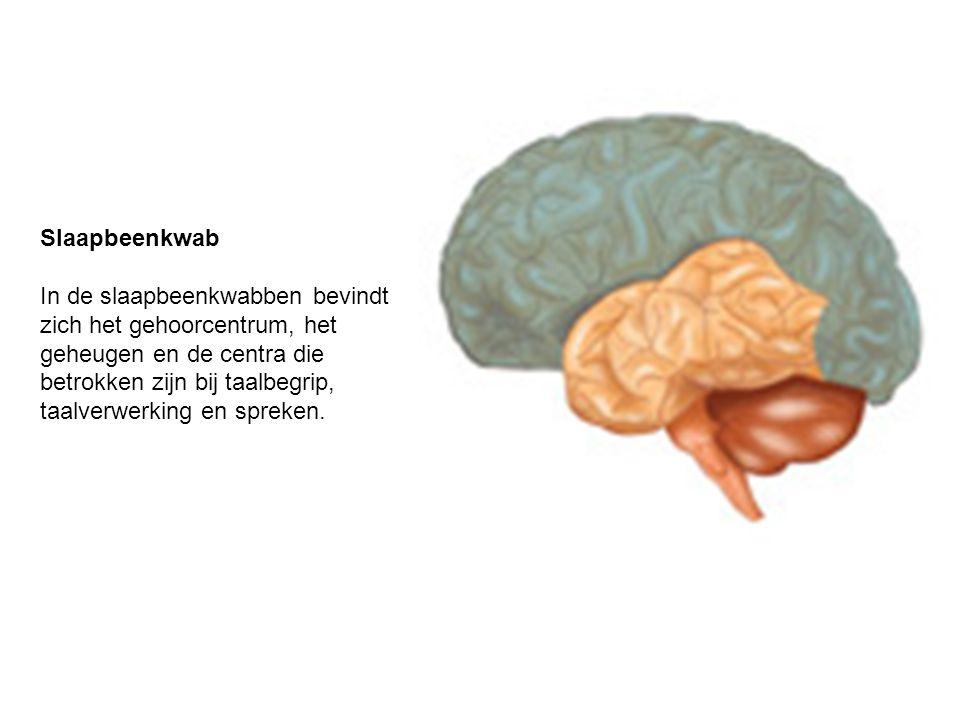 Slaapbeenkwab In de slaapbeenkwabben bevindt zich het gehoorcentrum, het geheugen en de centra die betrokken zijn bij taalbegrip, taalverwerking en sp