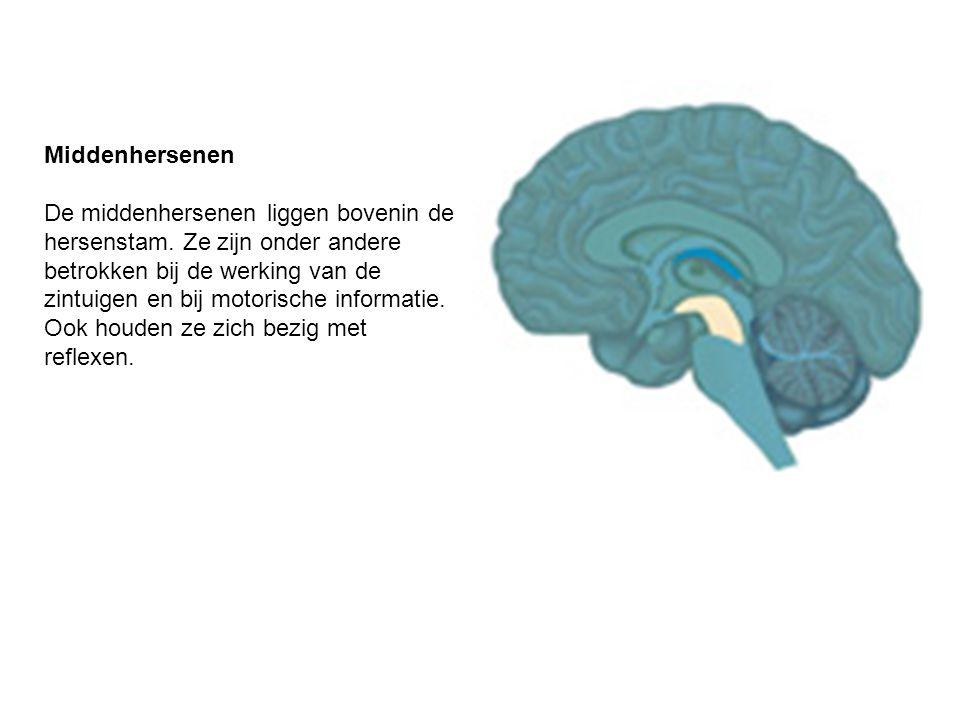 Middenhersenen De middenhersenen liggen bovenin de hersenstam. Ze zijn onder andere betrokken bij de werking van de zintuigen en bij motorische inform