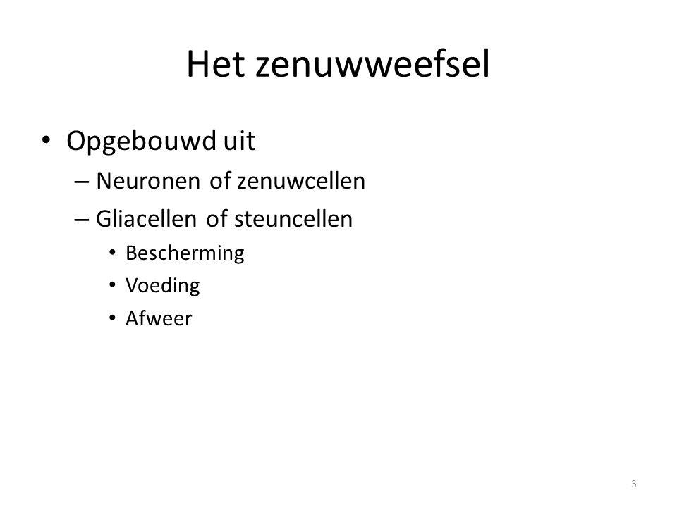 Het zenuwweefsel • Opgebouwd uit – Neuronen of zenuwcellen – Gliacellen of steuncellen • Bescherming • Voeding • Afweer 3