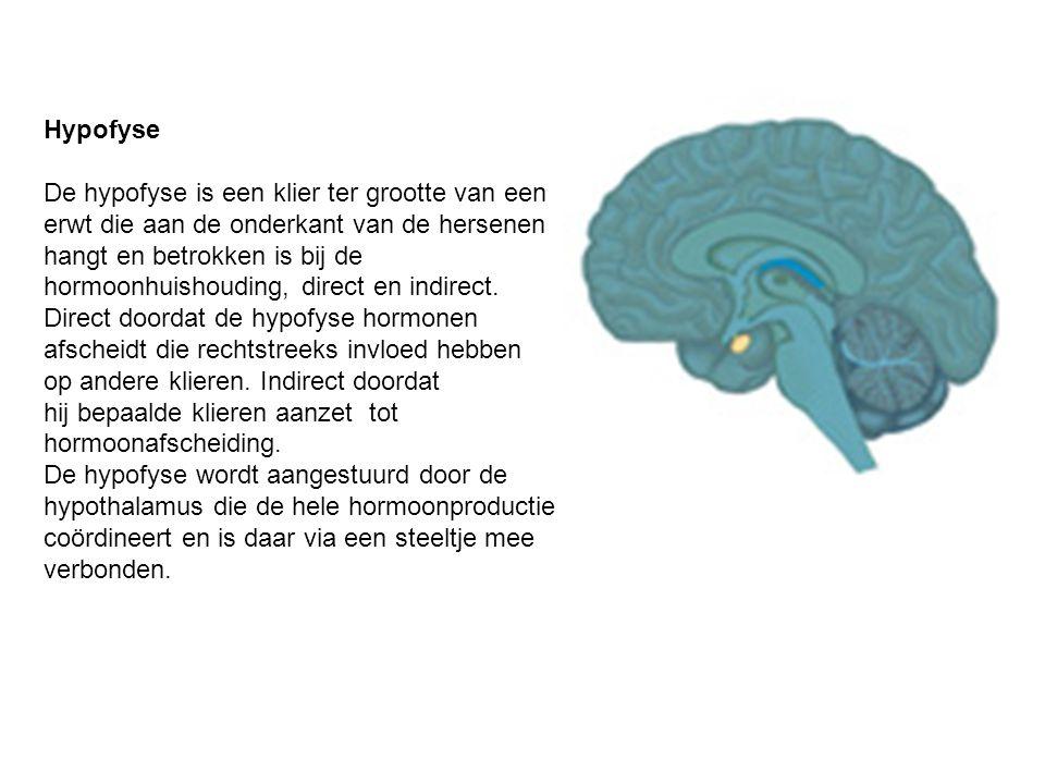 Hypofyse De hypofyse is een klier ter grootte van een erwt die aan de onderkant van de hersenen hangt en betrokken is bij de hormoonhuishouding, direc