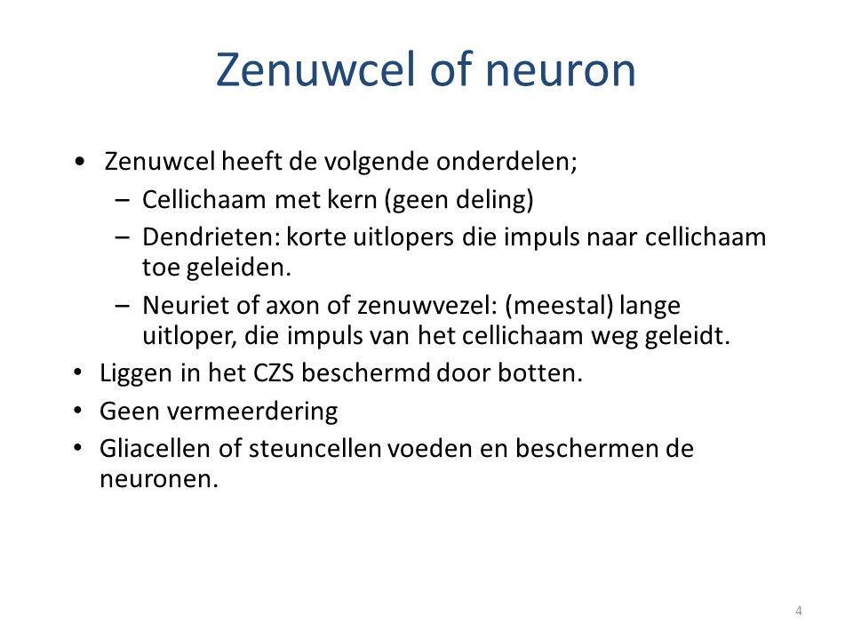 4 Zenuwcel of neuron •Zenuwcel heeft de volgende onderdelen; –Cellichaam met kern (geen deling) –Dendrieten: korte uitlopers die impuls naar cellichaa