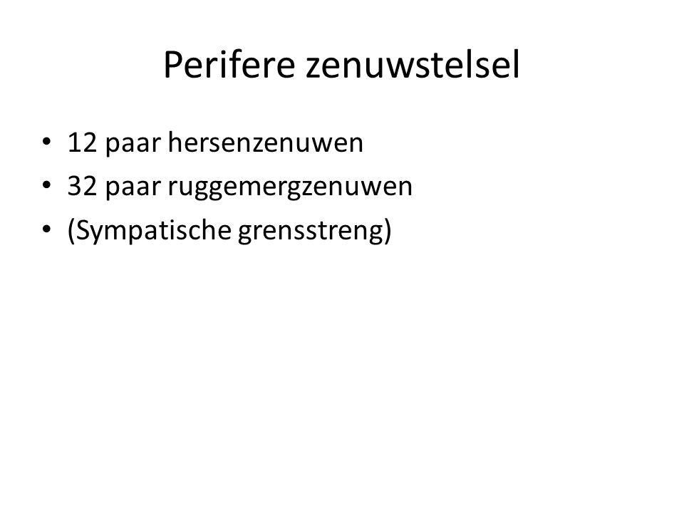 Perifere zenuwstelsel • 12 paar hersenzenuwen • 32 paar ruggemergzenuwen • (Sympatische grensstreng)