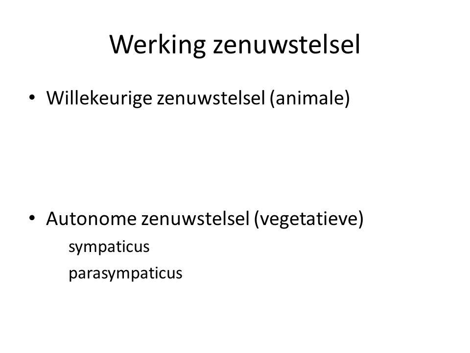 Werking zenuwstelsel • Willekeurige zenuwstelsel (animale) • Autonome zenuwstelsel (vegetatieve) sympaticus parasympaticus