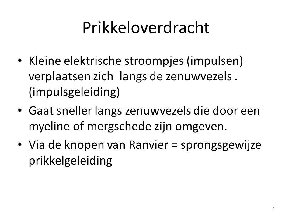 Prikkeloverdracht • Kleine elektrische stroompjes (impulsen) verplaatsen zich langs de zenuwvezels. (impulsgeleiding) • Gaat sneller langs zenuwvezels