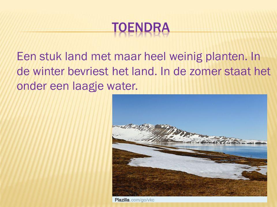 Een stuk land met maar heel weinig planten. In de winter bevriest het land. In de zomer staat het onder een laagje water.