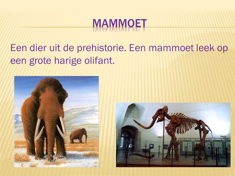 Een dier uit de prehistorie. Een mammoet leek op een grote harige olifant.