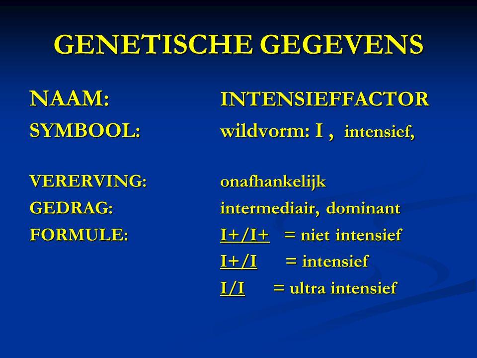 GENETISCHE GEGEVENS NAAM: INTENSIEFFACTOR SYMBOOL:wildvorm: I, intensief, VERERVING:onafhankelijk GEDRAG:intermediair, dominant FORMULE:I+/I+ = niet i